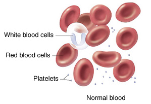 Image of normal blood.
