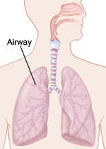 Outline of respiratory system showing the lungs and airways